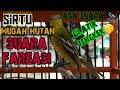 Sirtu Muda Hutan Buyi Fareasi  Mp3 - Mp4 Download
