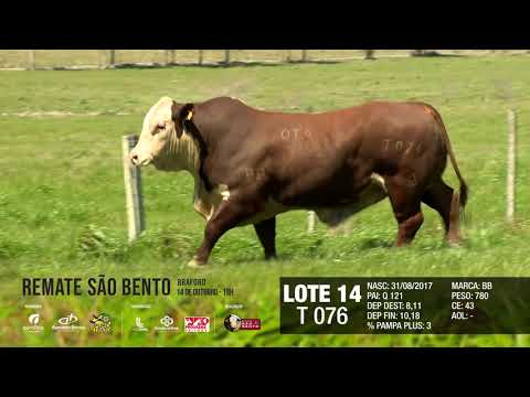 LOTE 14 T 076
