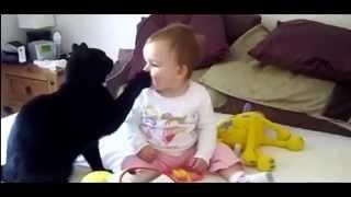 Ласковые коты