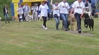 Guide Dog Walk-on