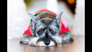 De cachorro juguetón a viejito pausado: así les llega la vejez a las mascotas | Noticias Caracol