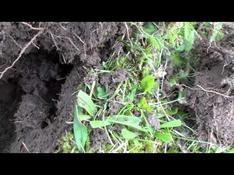 metal detecting uk a garden search