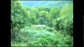 Flock of sheep in wild vegetation - in aromanian village Aminciu (Metsovo), Greece
