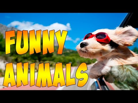Cute And Funny Animals – A Funny Animal Videos Compilation August 2016
