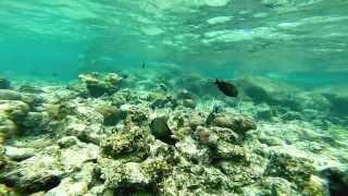 maldives underwater NY2014