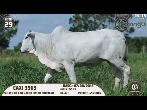 LOTE 29   CAXI 3969
