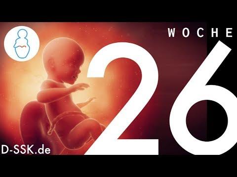 26. SSW / 26. Schwangerschaftswoche ✪ D-SSK.de - YouTube
