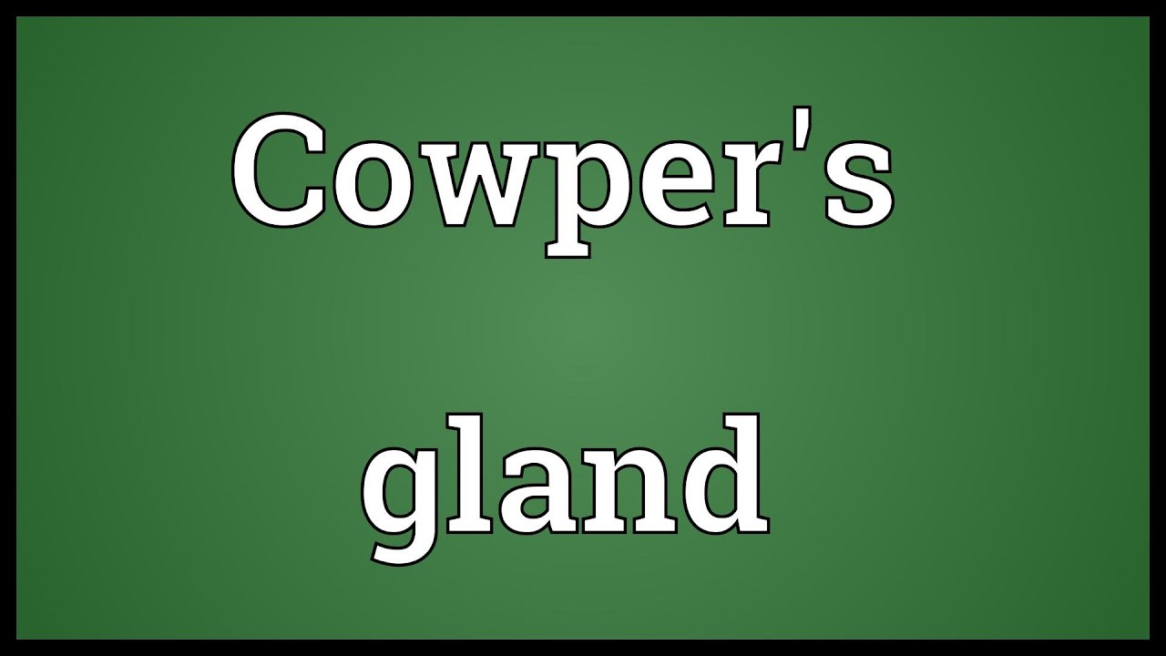 Cowpers Gland Meaning Youtube
