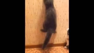 коты - охотники за обоями
