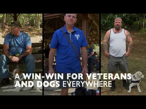 Veteran Saves Shelter Dogs to Save Other Vets