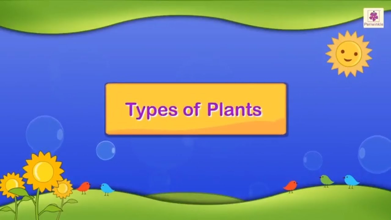 medium resolution of Types of Plants   Science For Grade 3 Kids   #3 - YouTube
