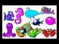 Kutahu Dunia Air | Ikan, bintang laut, kuda laut | Video pendidikan anak
