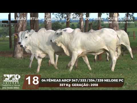 LOTE 18