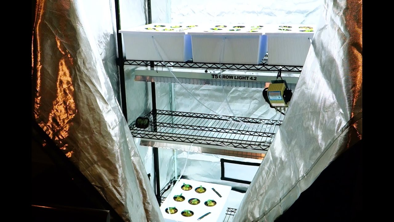 Flourishing Greens Lettuce & Cucumbers Grow Tent View - YouTube
