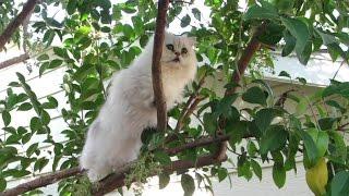 14 09 11 Persian kitty, Kalahari, in his own feature film