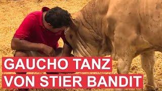 ගවයෙක්ව බේරා ගත පසුව තියෙන සතුට - Gaucho-Tanz von Stier Bandit als Dank!
