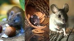 Ant Control 916-226-4836 Cameron Park CA 95682 Rodent Control