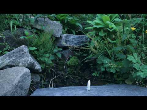Tom Rosenthal - Miffed (Okta Remix)