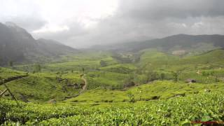 Time Lapse at a Tea Estate in Munnar (4K Video)