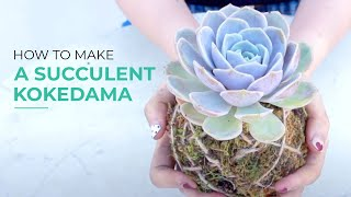 Arranged Succulent Kokedama Moss ball