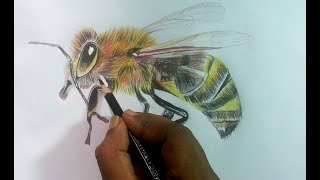 How to Draw 3D Hornet with Color Pencils/Farabi Drawing Academy