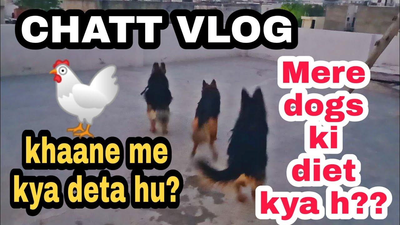 Chatt Vlog / Mere dogs ki diet 🐔🐔