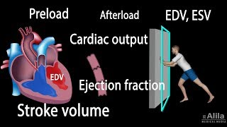 Cardiac Output, Stroke volume, EDV, ESV, Ejection Fraction