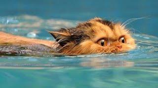 коты и неудачные моменты с водой