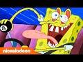 Spongebob Squarepants | Nickelodeon Arabia | سبونج بوب | سبونج بوب يفشل في اختبارات القيادة...
