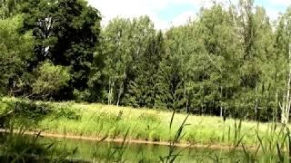 Download 4 часа! Поющий пруд Пение соловья Звуки природы Лягушки в пруду Mp3 and Videos