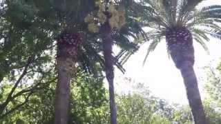 выставка кактусов в Сассари 2015 2 часть
