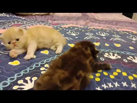 Two lazy adorable little Kitten