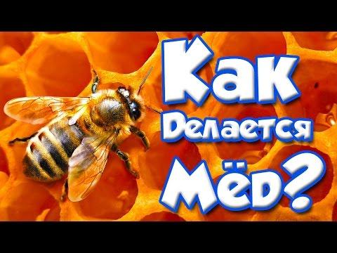 Как пчелы делают мед видео дискавери