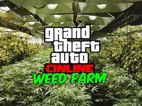 Gta 5 online bikers how to setup a business.Weed farm.