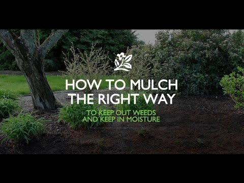 How To Mulch The Right Way | Monrovia Garden