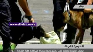 بالفيديو.. عروض لـ'كلاب الكشف عن المخدرات' بأكاديمية الشرطة