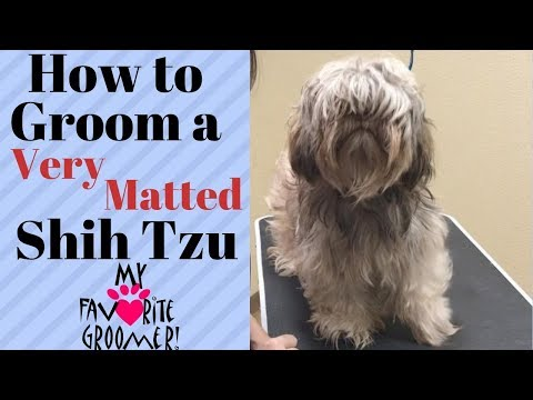 how-to-groom-a-shih-tzu-very-matted