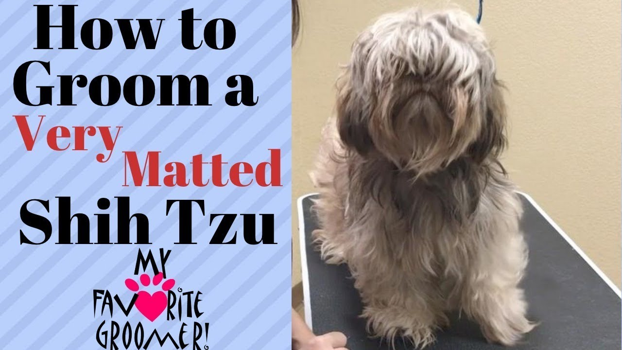 How to Groom Shih Tzus: 10 Steps (with Pictures) - wikiHow
