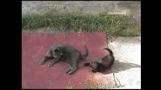 Кошки на природе!