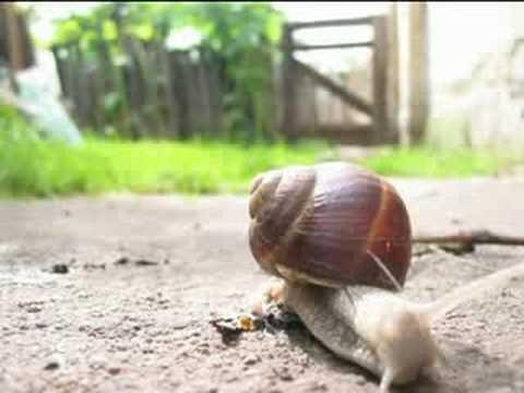 Snail Timelapse (csiga Gyorsított Felvétel)