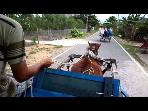 Superstar Celebrity Kurt Tay in Vietnam in Nov2014 on Pity Poor Horse Ride