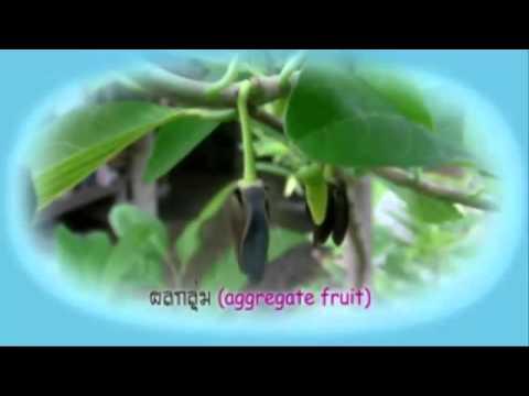 การสืบพันธุ์ของพืชดอกและการเจริญเติบโต ม.5/1 B.W.S