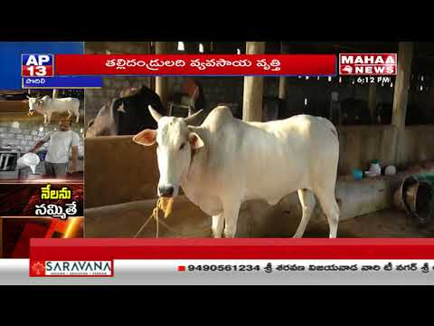 Success Story of Software Employee Dairy Farm | Prakasam | Mahaa News