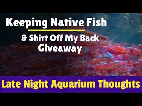 keeping-native-fish-and-hangout---late-night-aquarium-thoughts