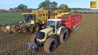 Rüben roden Tag & Nacht verladen Weizen drillen - Rübenroder Ropa Tiger 6 Maus 4 - Fendt 930 Farmer