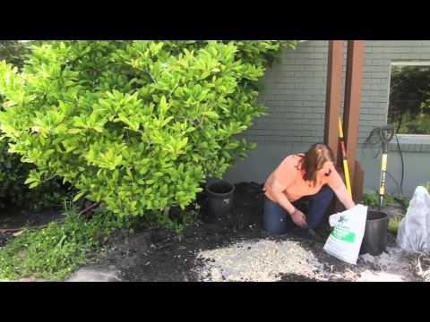 How to Garden With Sawdust in the Soil : Grow Guru