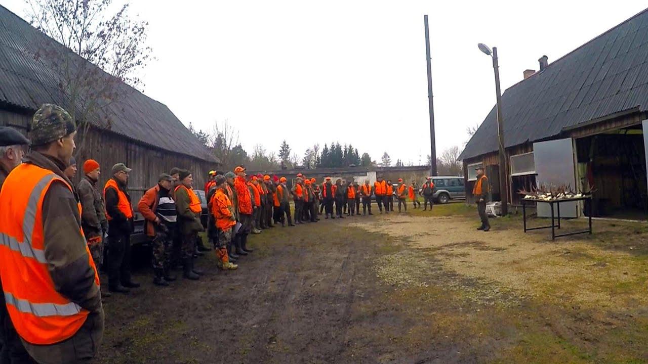 Охота #56 большая охота на лося, работа собак, 4 коллектива часть 1