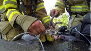 Bombeiros salvam gatinho após incêndio