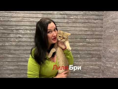 Лиля Бри: женщина и кошка
