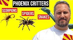 Arizona Scorpions, Snakes and Insects | Moving to Arizona (Living in Phoenix Arizona)